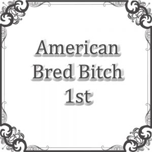 American Bred Bitch