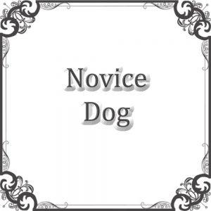 Novice Dog
