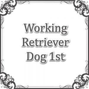 Working Retriever Dog